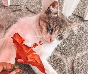 Animais, cat, and flowers image