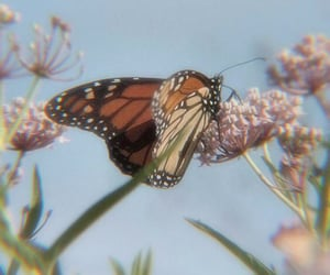 butterfly, aesthetic, and flowers image