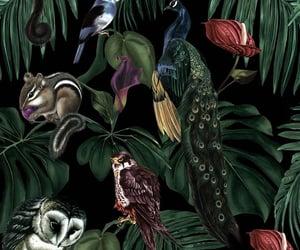 animal, garden, and owl image