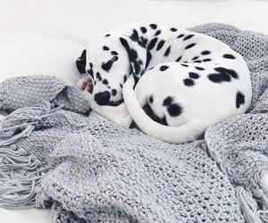 animals, pets, and beautyful image