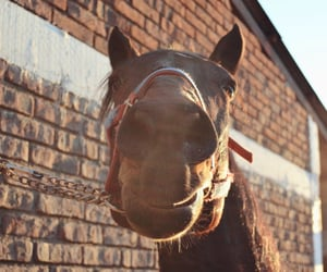 Animales, equestrian, and horse image