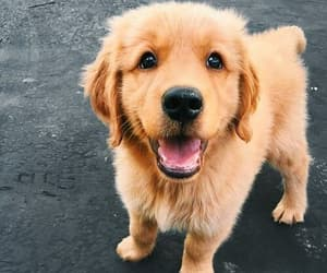 adorable, dog cute, and pet image
