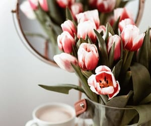 spring and tulips image