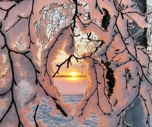 branches, snowy, and winter image