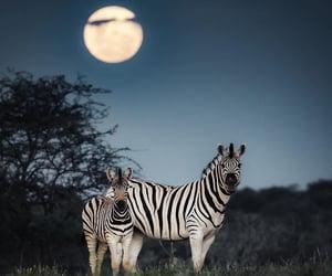 animal, moon, and night image
