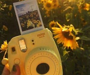 yellow, sunflower, and polaroid image