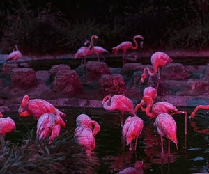 cruel summer, neon, and flamingo image
