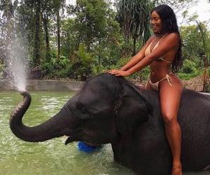 elephant, shower, and vibes image