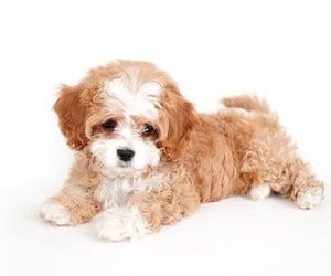 animal, dog, and furry image