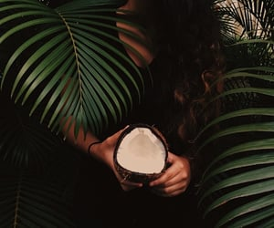 coconut, jungle, and tropical image