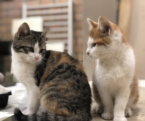 cat, kittens, and cats image