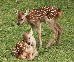animal, deer, and cute image