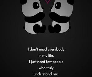 panda, love, and 🐼 image