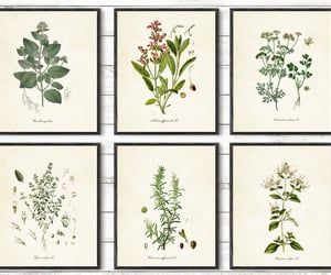 etsy, botanical prints, and gift for her image
