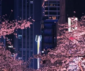buildings, cherry blossom, and japan image
