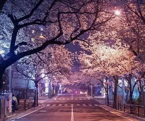 cherry blossom, road, and japan image