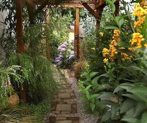 ferns, pathway, and flowers image