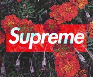 cool, supreme, and yeşil image