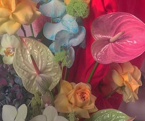 colorful, flowers, and glossy image