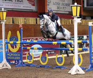 equestrian, equine, and grey image