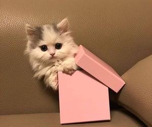 animal, box, and cat image