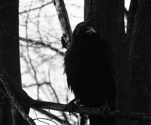 crow, goth, and raven image