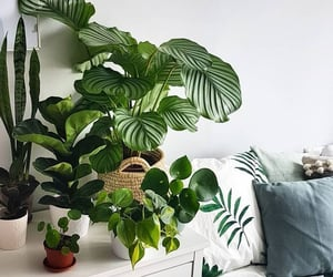 aesthetic, bedroom, and plants image