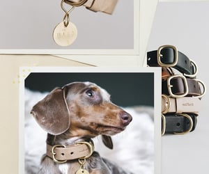 Dog Collar, must have, and leather accessories image