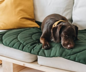 dog bed, dog accessories, and must have image