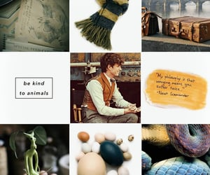aesthetic, character, and newt scamander image