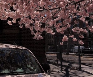 aesthetic, car, and flower image