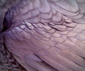 aesthetic, wings, and feather image