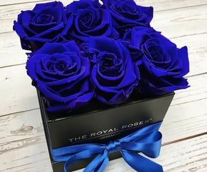 bouquet, flowers, and royal blue image