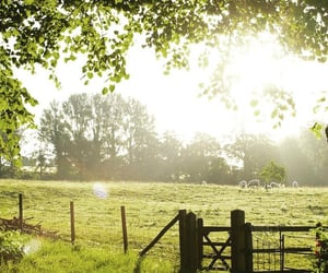cottage, country living, and sheep image