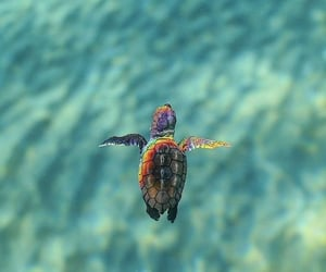 little, sea, and turtle image