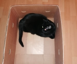 black, cat, and box image
