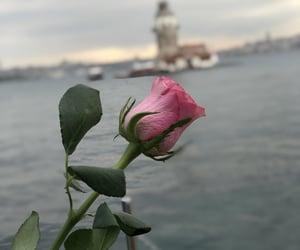 istanbul, pink rose, and kız kulesi image
