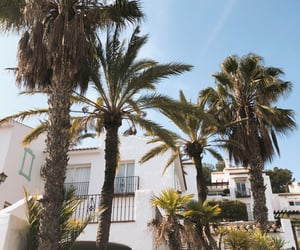 palms, spain, and summer image