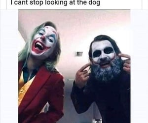 the dog, can't stop looking, and star of the show image