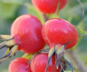 autumn, garden, and hips image