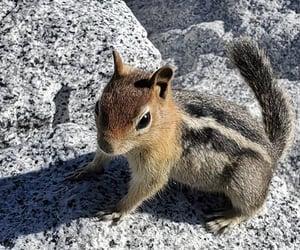 animal, beautiful, and photo image