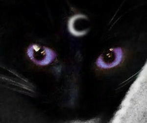 aesthetic, dark, and magic image