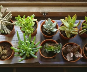 nature, plants, and succulent image