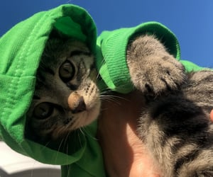 cat, gatito, and amordemivida image