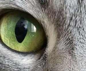 animal, eye, and face image