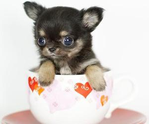 dog, people, and cute image