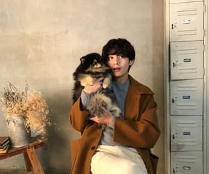 dog, puppy, and v image