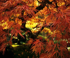 autumn, garden, and light image