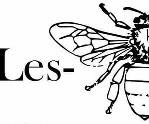 bee, lesbian, and gay image
