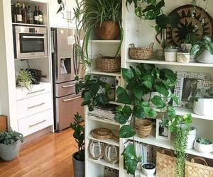 bright, green, and shelves image